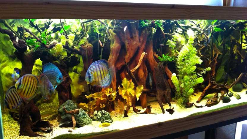 aquar cifal cr ation d 39 aquarium sur mesure et entretien. Black Bedroom Furniture Sets. Home Design Ideas