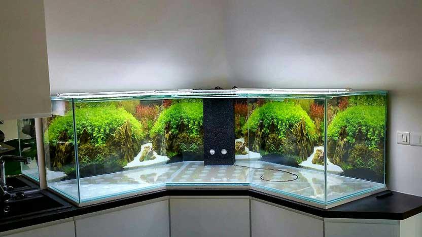 Aquar cifal cr ation d 39 aquarium sur mesure et entretien for Aquarium angle